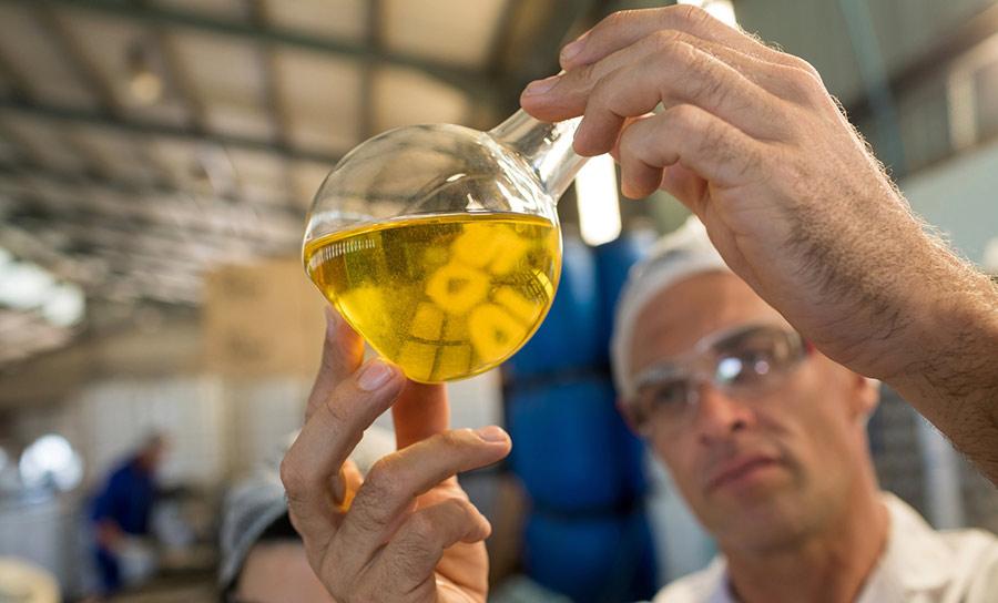 kakovost olivnega olja